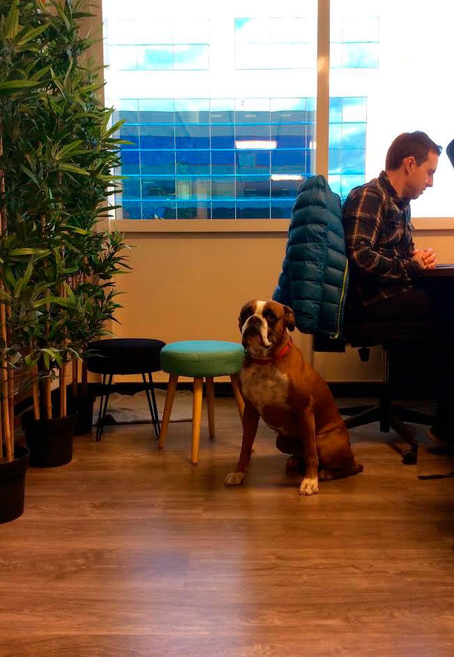 espacio-dogfriendly-coworking.jpg