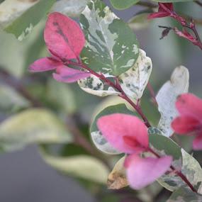 blare by Lana Kirstein - Flowers Flowers in the Wild (  )