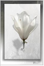 Foto: Blüte