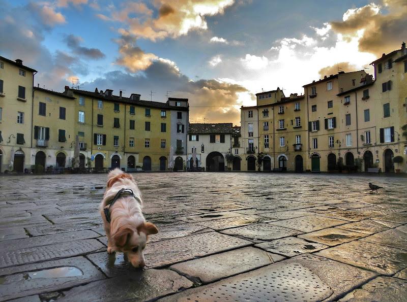 Il mio cane  nel mio quartiere all'alba  di Giorgio Lucca