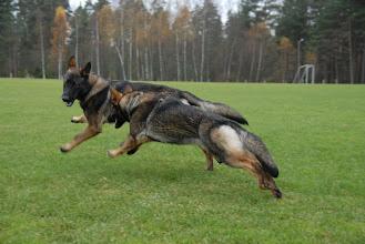 Photo: Ailo og Ayla i farta!