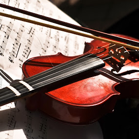 Violin by Wilfredo Garrido - Artistic Objects Musical Instruments ( violin, musical instruments, artistic objects )