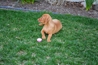 Photo: She'll just sit here and wait for Kourtlyn, see if she finds the egg