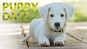 Puppy Days thumbnail