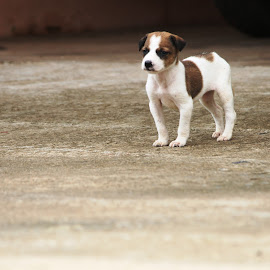 Hi by Vivek Chethan Muliya - Animals - Dogs Puppies ( month`, dogs, animals, puppies, watching )