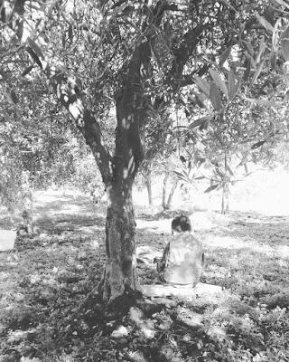 Bambino sotto l'albero d'ulivo di maffuduck81