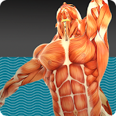 Muscle Tests 3 App