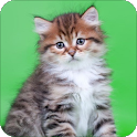 Best Cats Wallpaper icon