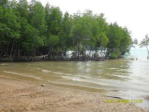 Photo: Der Railay East Beach ist mit Mangroven bewachsen