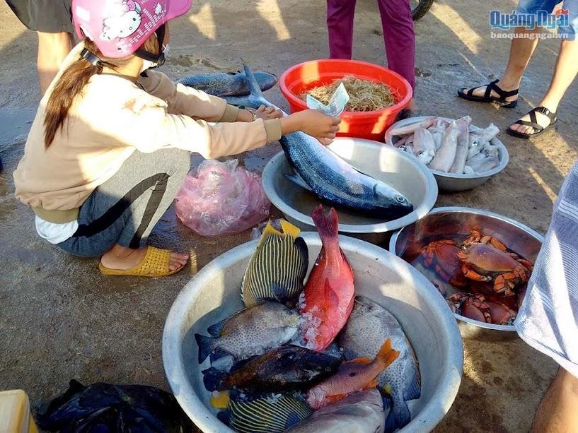 Rất nhiều loại hải sản ngon, lạ mà chỉ ở trên đảo Lý Sơn mới có.