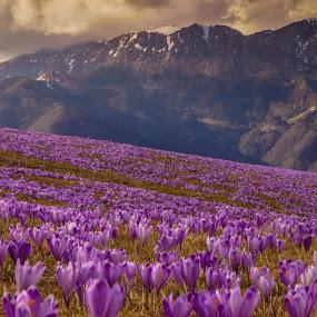 spring by Bojan Berce - Uncategorized All Uncategorized (  )