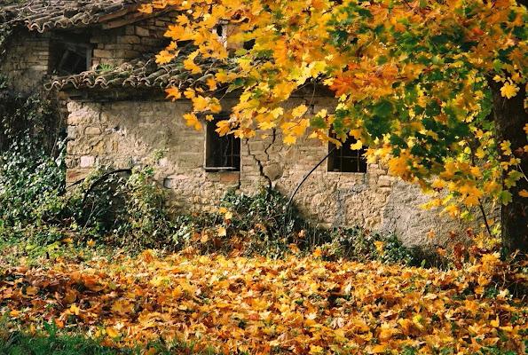 Abbandonata all'autunno di paolo-spagg