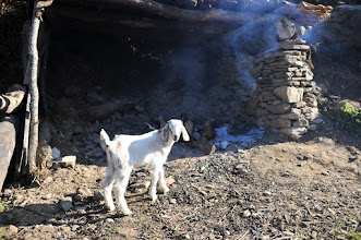Photo: 家々の家畜を見て歩くのも楽しい