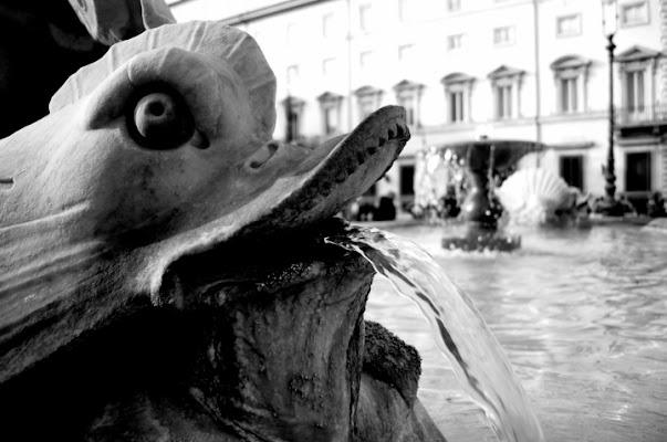 Delfini a Roma di clavicola