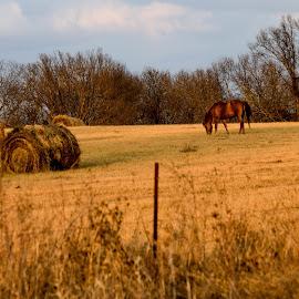 Rural Missouri  by Deborah Lucia - Landscapes Prairies, Meadows & Fields ( field, horse, haybales, rural, country )
