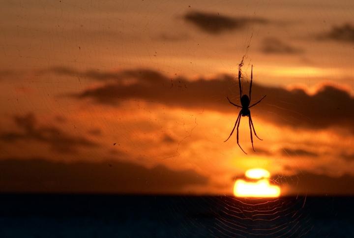Maui Frena il Sole di Andrea Izzotti