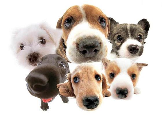 Resultado de imagem para fotografia de animais de estimação como