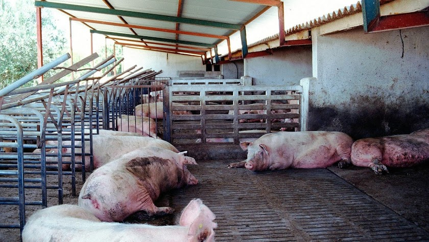 Foto de archivo de una macrogranja porcina en Almería.