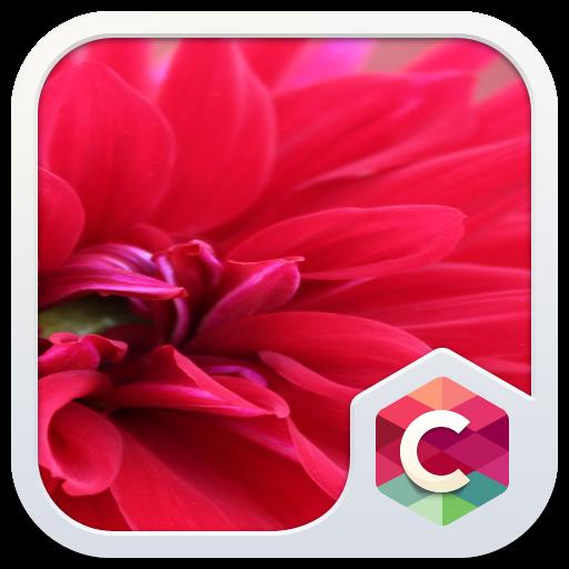 Red Pure Flowers Theme: Pretty Love Wallpaper HD