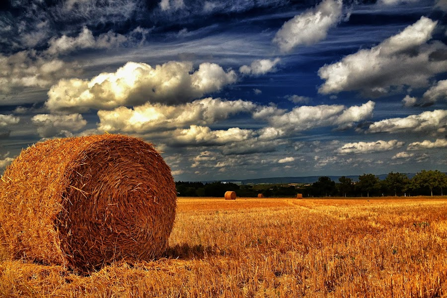 Autumn! by Olaf Pohling - Instagram & Mobile iPhone ( field, autumn, straw, summer, sun )
