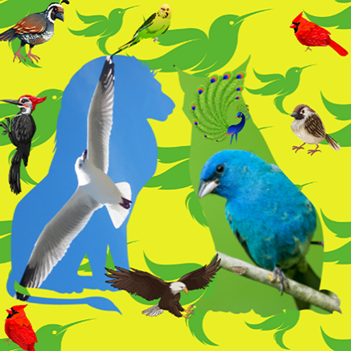 Birds Name with spelling and Picture - Apps on Google Play
