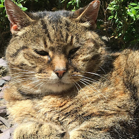 Shotoniphone6s by Anwesh Soma - Animals - Cats Portraits