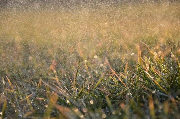pioggia artificiale di silviamassarotto