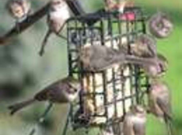 Winter bird treats  To Prepare  * 1 cup creamy peanut butter * 1/2 cup water  . INSTRUCTIONS: .  ...