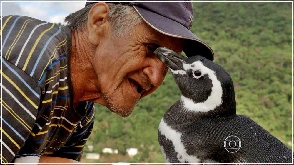 Dindim, o pinguim que sempre retorna para quem o ajudou