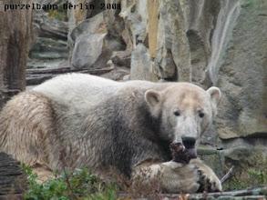 Photo: Ein dunkel eingefaerbter Knut ;-)