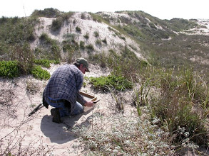 Photo: Sifting sand drawn from around the roots of plants on South Padre Island.