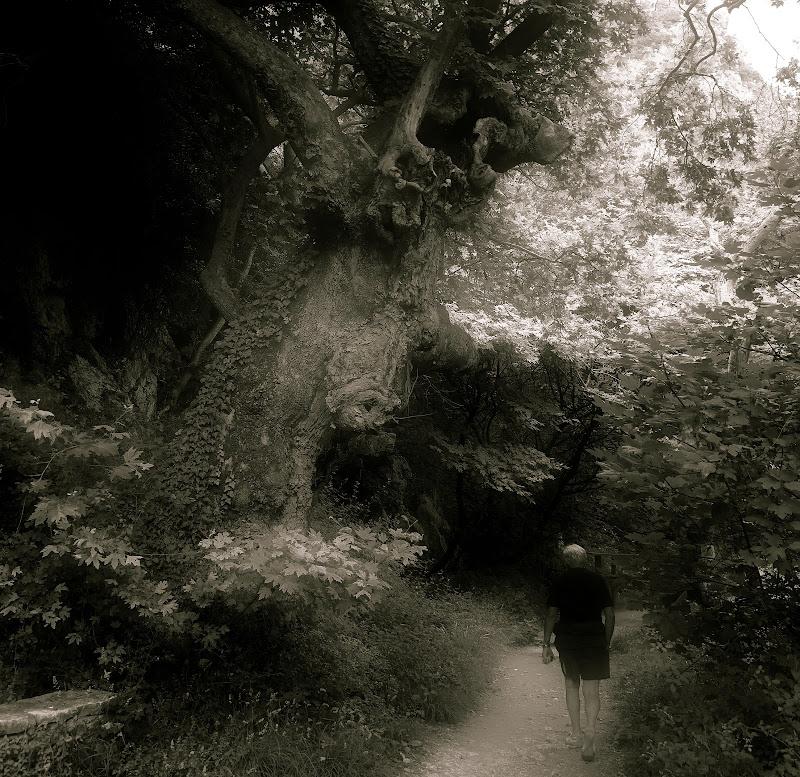 una strana presenza nel bosco . di isidoro