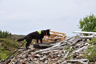 Photo: Vilma venter på belønning fra Jan Ståle.