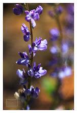 Photo: Eastern Sierras-20120716-533