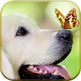 Download Butterflies Live Wallpaper apk direct download