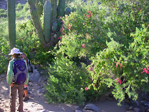 Photo: San Miguel bush
