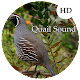 Quail Sounds (app)