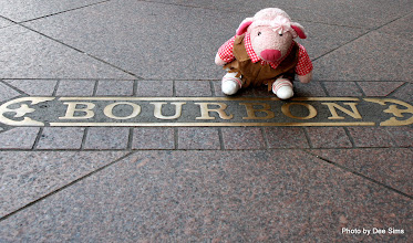 Photo: (Year 3) Day 65 - Pippa on the Famous Bourbon Street in New Orleans