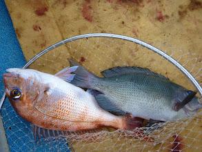 Photo: 真鯛とクロのダブル!