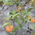 Flora de Cuenca Santa Inés (Zamorano U., Honduras)