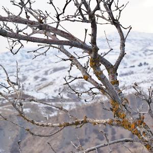 Tree Branch.JPG