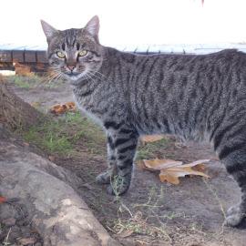 Ден by Georgi Kolev - Animals - Cats Portraits ( земя., дърво., котка., ден., листа. )