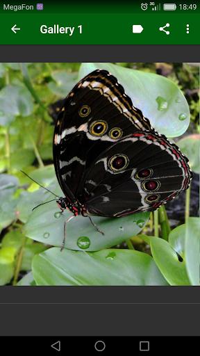 Beautiful Butterflies screenshot 2