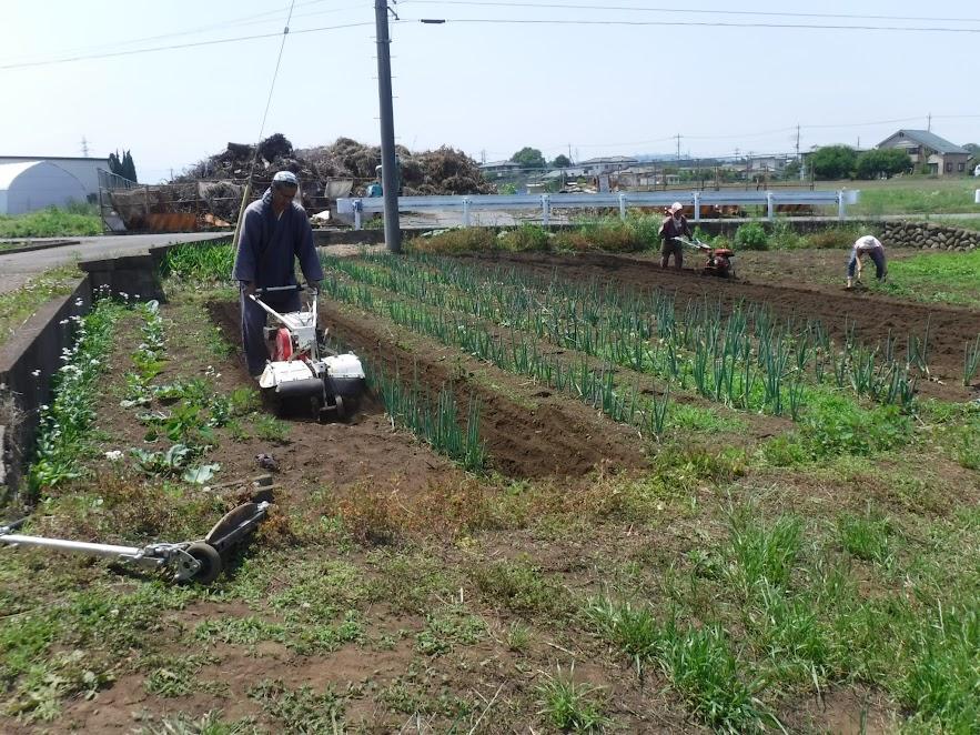手前、定植してあるネギの間をリターンカルチで除草する丈ちゃん、奥で耕耘する私と、除草する義父