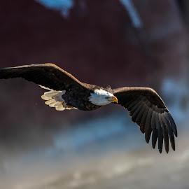 by Danny Roberts - Animals Birds