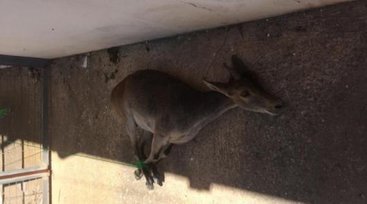 Denuncian al exalcalde de Félix por disparar a una cabra desde una vivienda