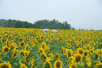 Photo: 北竜町の景色・葉月(2014年8月)