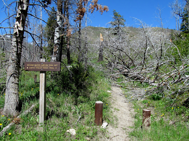 Second Water Canyon trail
