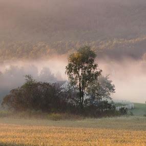 Early AM Fog by Jackie Sleter - Landscapes Weather ( mountains, fog, trees, landscape )