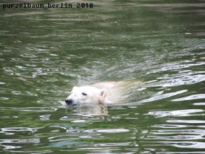 Photo: Knut erkundet die grosse Wasserflaeche